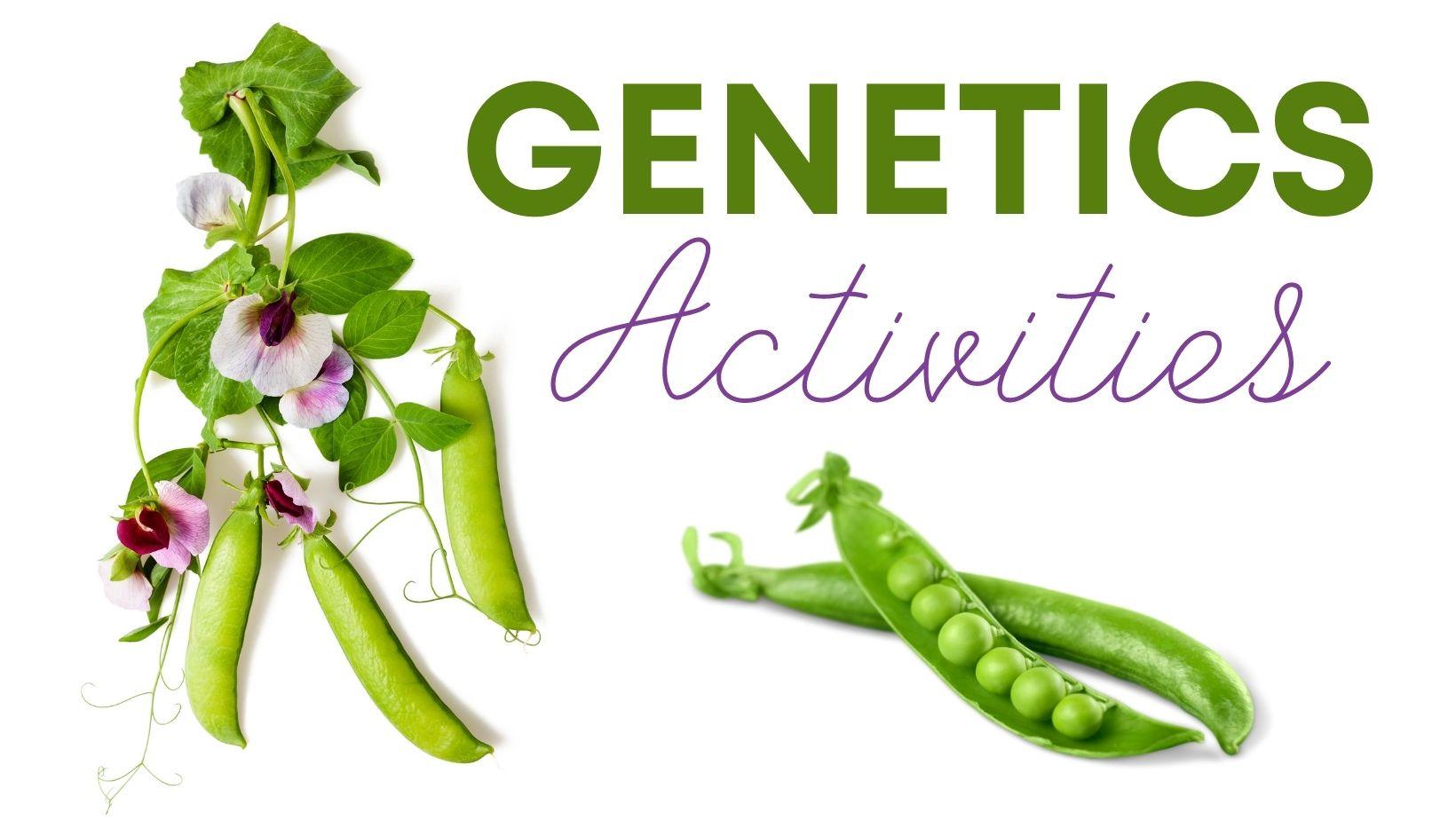 genetics activities