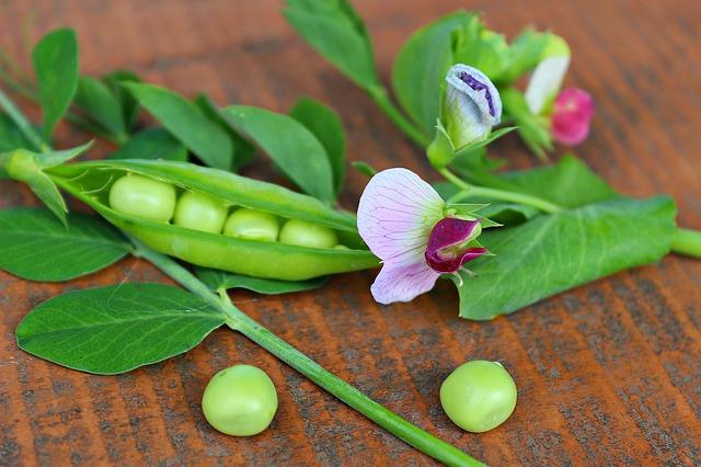 mendel's peas